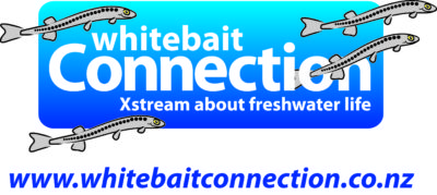 Whitebait connection Logo-REVERSED-Final